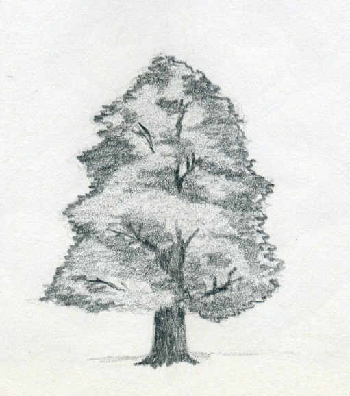 how to draw a cypress tree