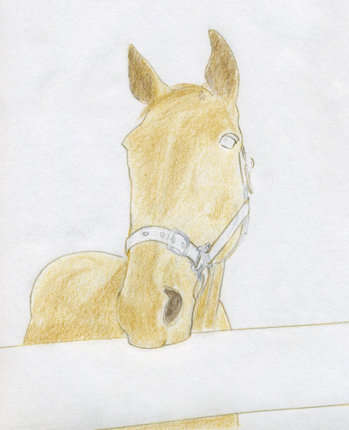 How To Draw Horse Head