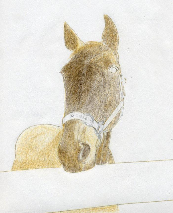 Realistic horse head drawings