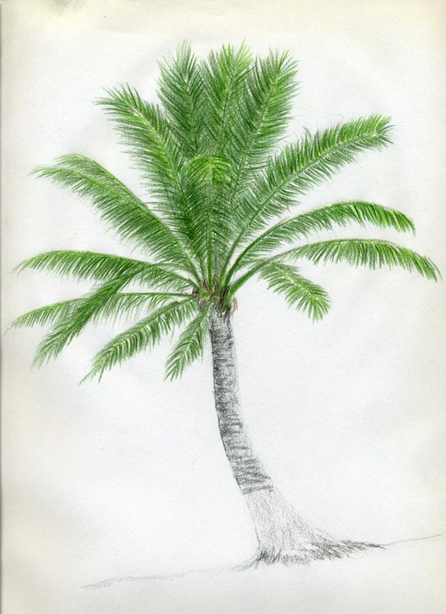 Easy Pencil Drawings Of Trees Darker green color pencil