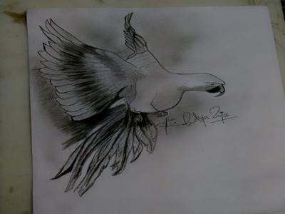 Drawing of My Parrot