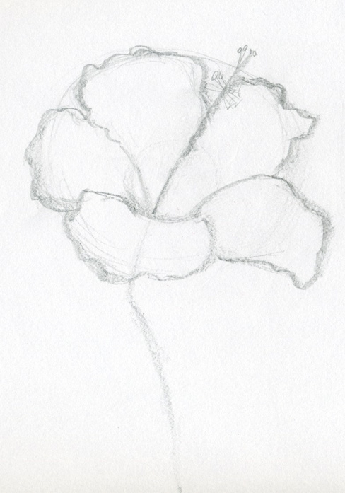 Hibiscus flowers drawing tutorial mightylinksfo