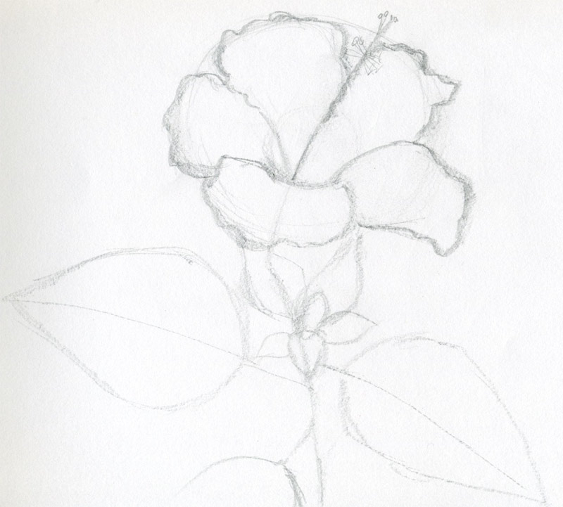 Easy Flower Sketch Now you can sketch and draw
