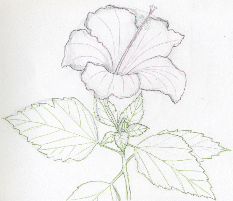 Easy Drawings Of Flowers In Pencil See how the veins on petals