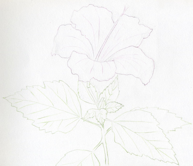 Easy Drawings Of Flowers In Pencil Hibiscus Flower...