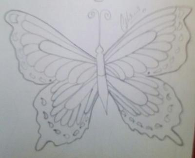 Pencil sketch of butterfly