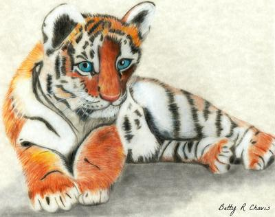 First Colored Pencil Drawing Of Tiger Cub
