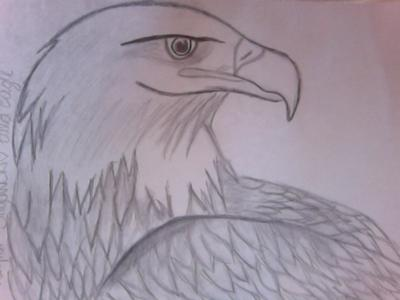 First Eagle drawing