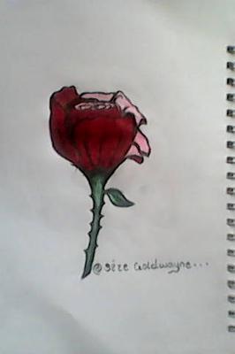 Godwin rose drawing