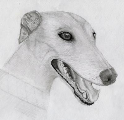 Greyhound Easy Mickey Mouse Drawings
