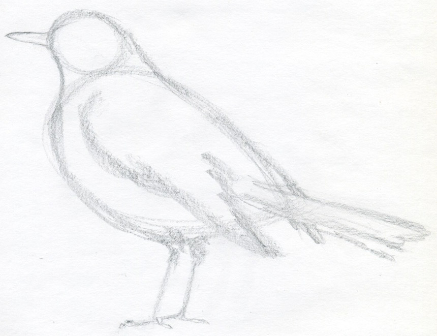 Simple sparrow drawings - photo#16
