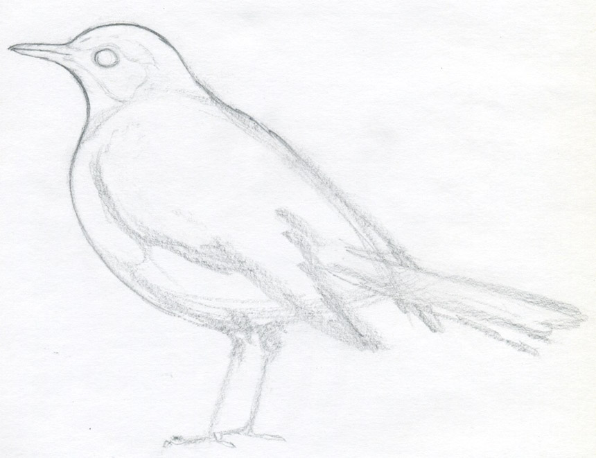 Drawing Lines With Html : How to draw a bird and what you need know