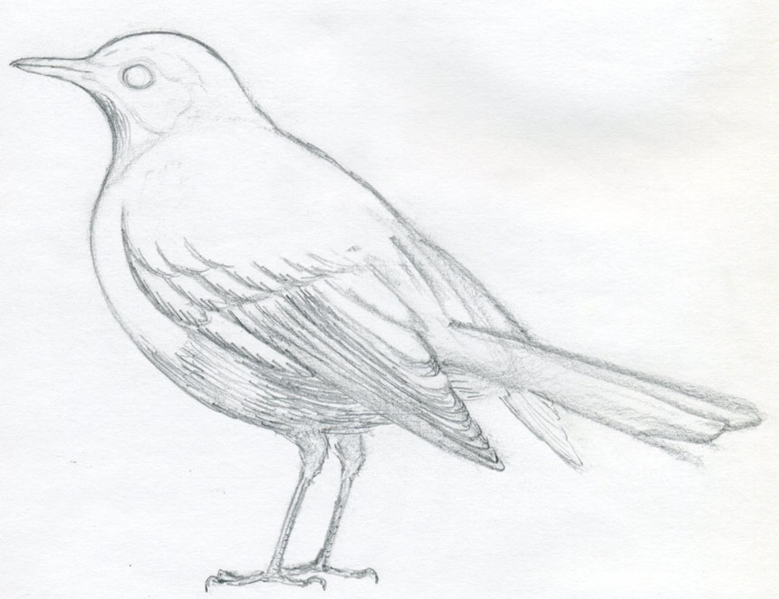 Pencil Sketch A Bird