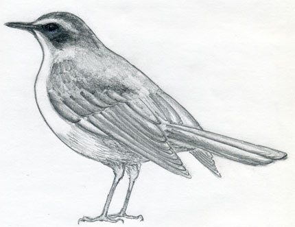 How To Draw A Bird And What You Need To Know