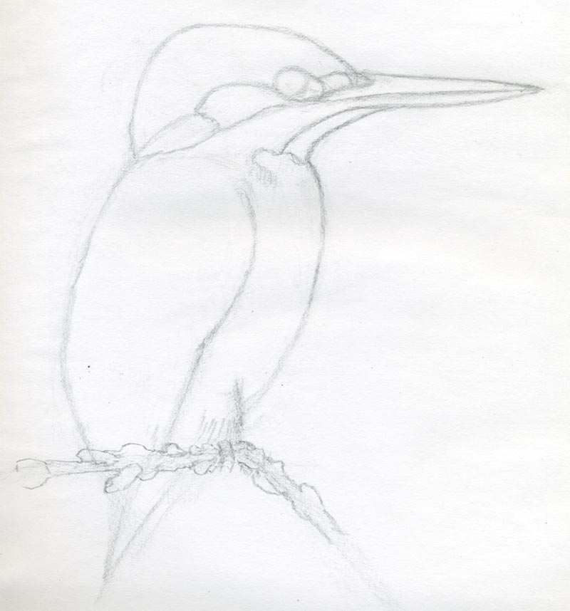 Line Drawing Kingfisher : How to draw a bird and what you need know
