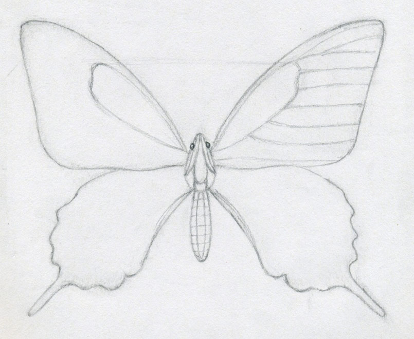 Easy Contour Line Drawing : How to draw a butterfly surprisingly easy