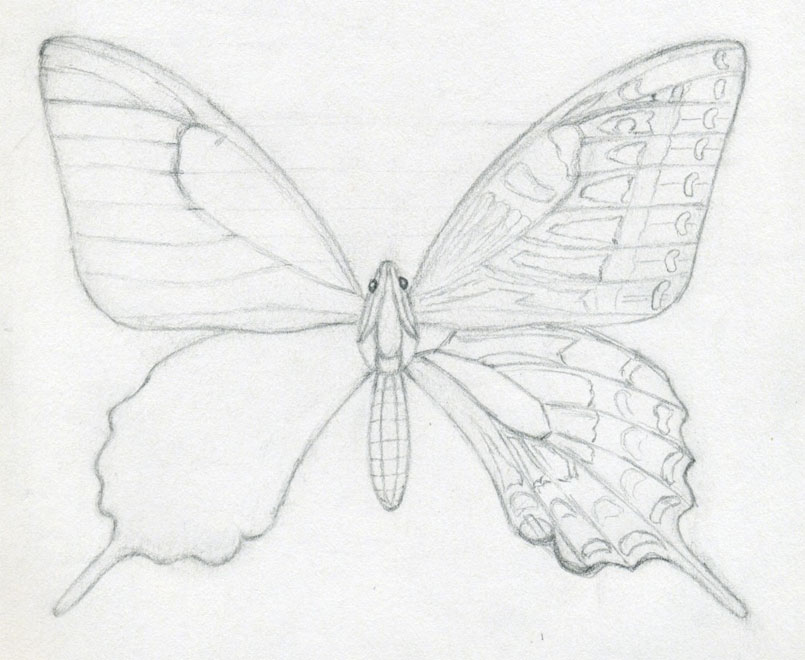 How To Draw A Butterfly. Surprisingly Easy!
