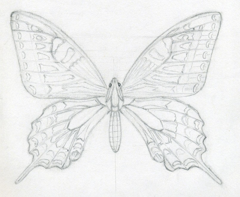 How to draw a butterfly surprisingly easy for Cool drawings of butterflies