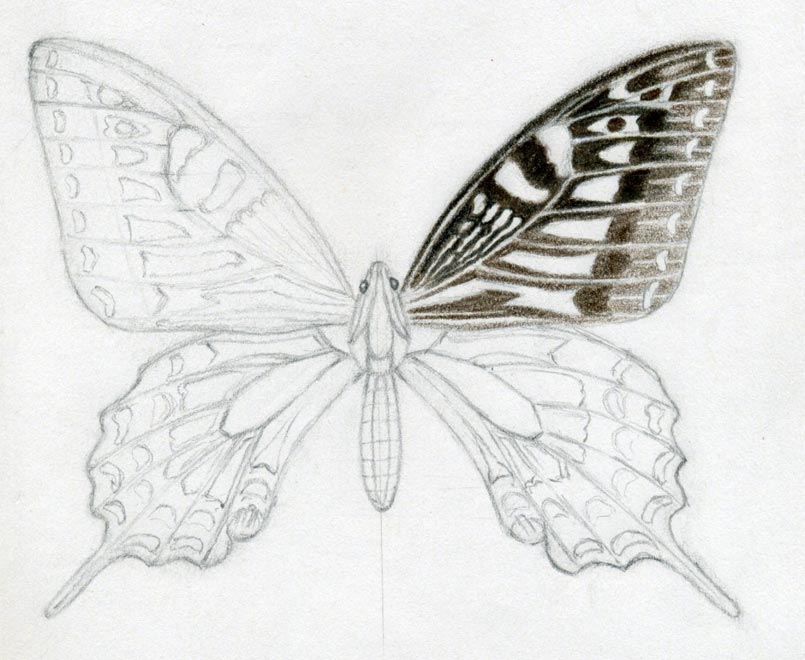 Pencil Sketches Of A Butterfly