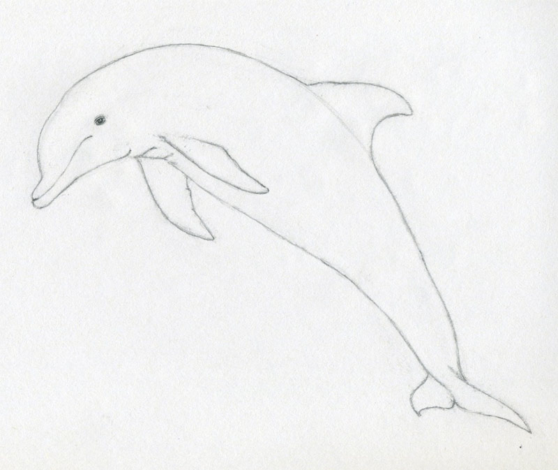 takes if you are serious about to learn how to draw a dolphin this ...