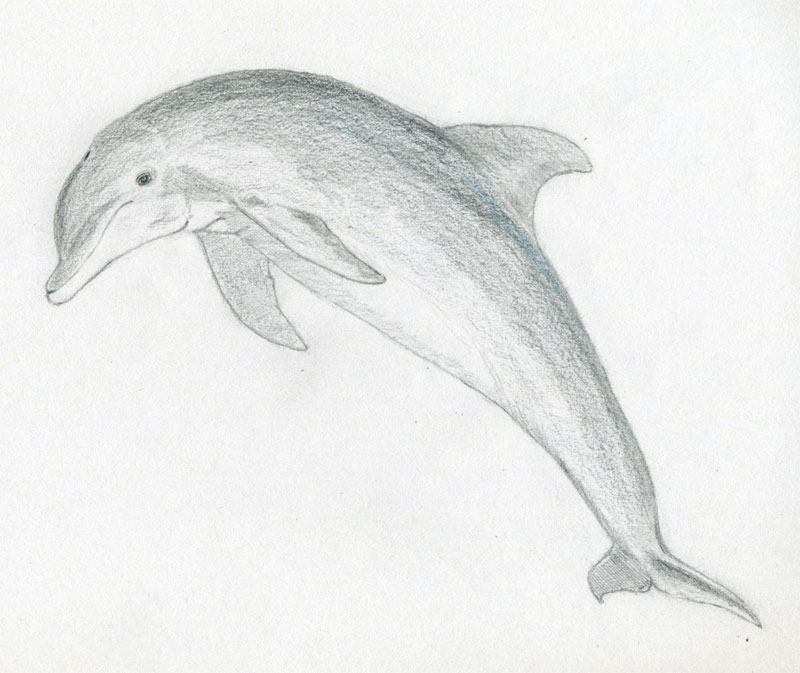 It's just a picture of Eloquent Dolphin Easy Drawing