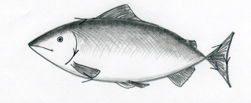 how to draw a fish06jpg a fish 500x207