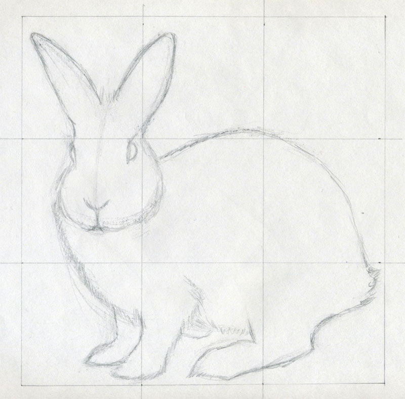 Simple rabbit drawing