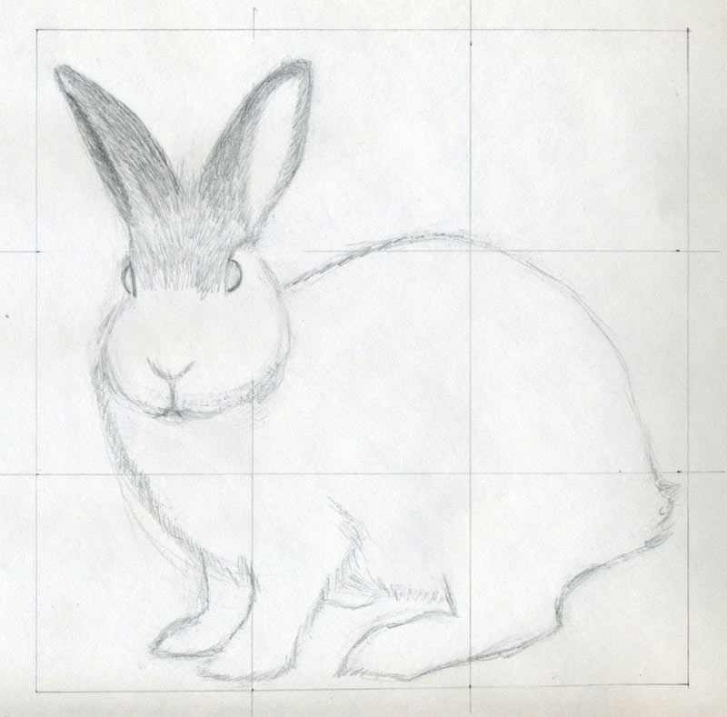 refine the body contour and outline the facial features eyes and nose at this stage your rabbit is almost a perfectly shaped sketch