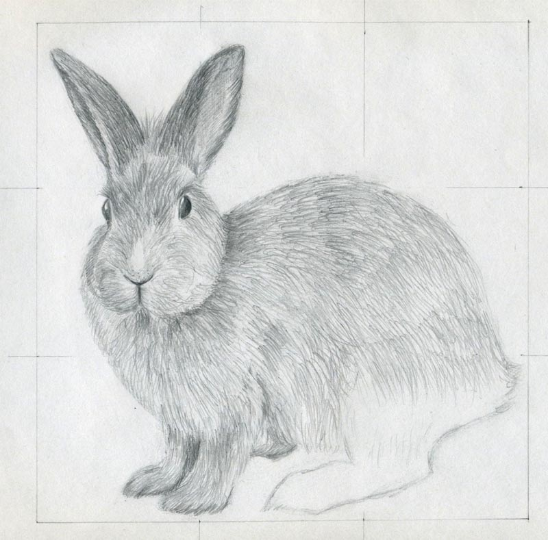 how to draw rabbit picture