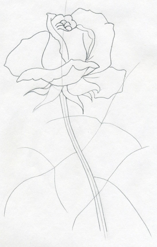 Rose Line Drawing Easy : Draw a rose quickly simply and easily