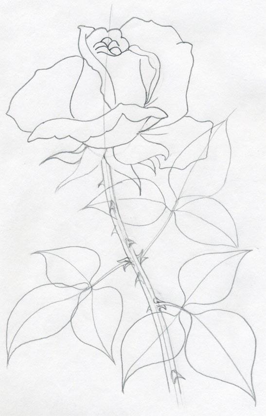 Drawing Lines In Dreamweaver : How to draw roses Уроки рисования ИЗО Каталог