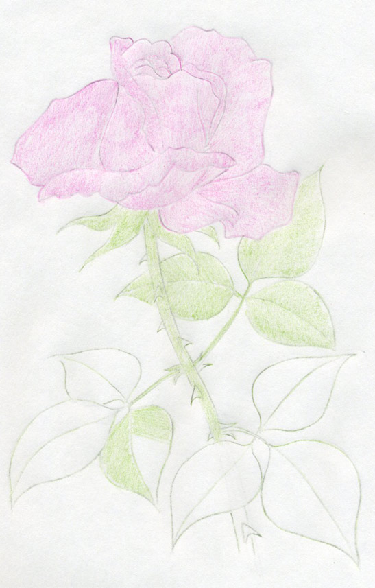 What is the best essay tittle of one perfect rose?