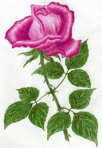Draw a Rose Quickly Simply And