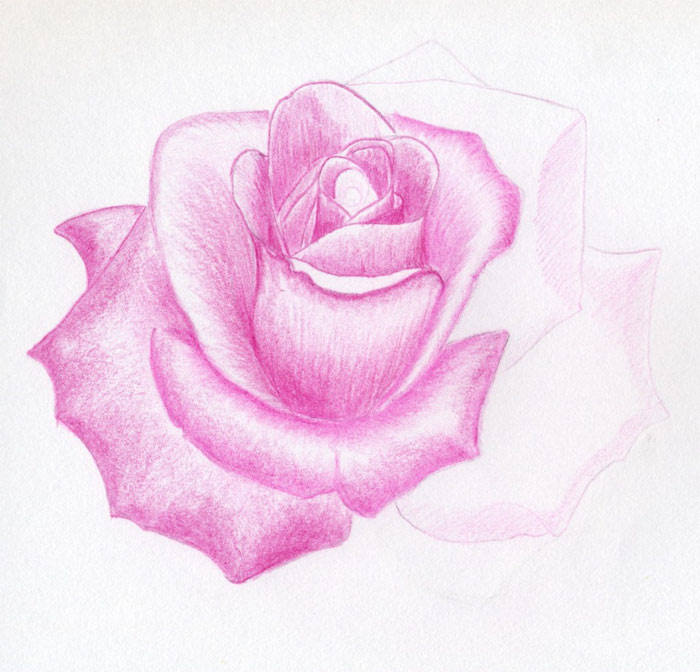 Bernard vargas how to draw a rose in pencil Teach me how to draw a flower