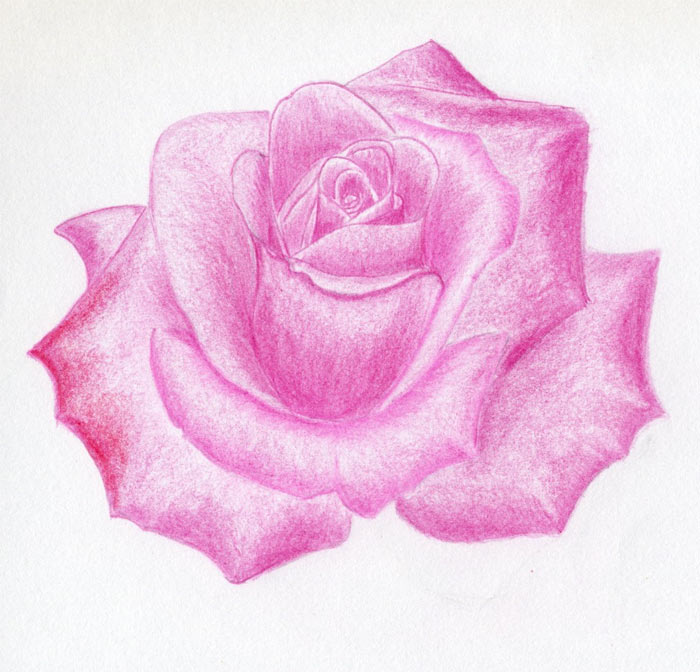 Draw a rose quickly simply and easily click on the image to enlarge shade the whole rose mightylinksfo