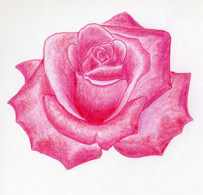 Gallery For gt Red Roses Sketch