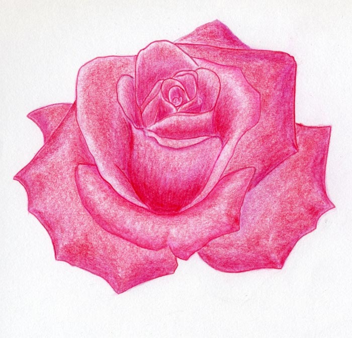 Draw a rose quickly simply and easily lets learn how to draw a rose head ccuart Image collections