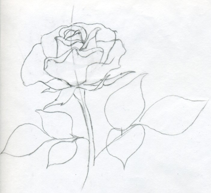 Rose Bushes Drawing How to Draw a Rose