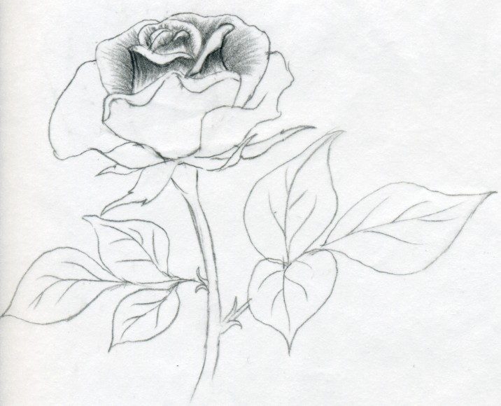 teach me how to draw a rose