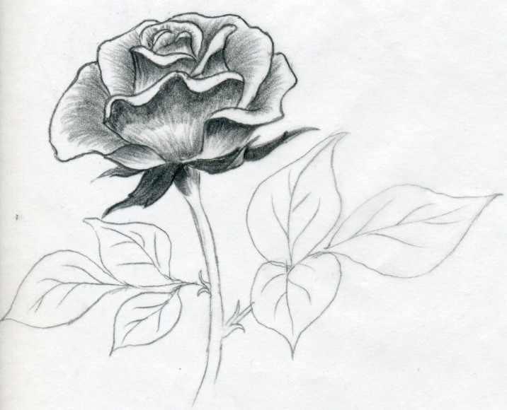 will notice how the pencil Pencil Drawing Pictures Of Flowers