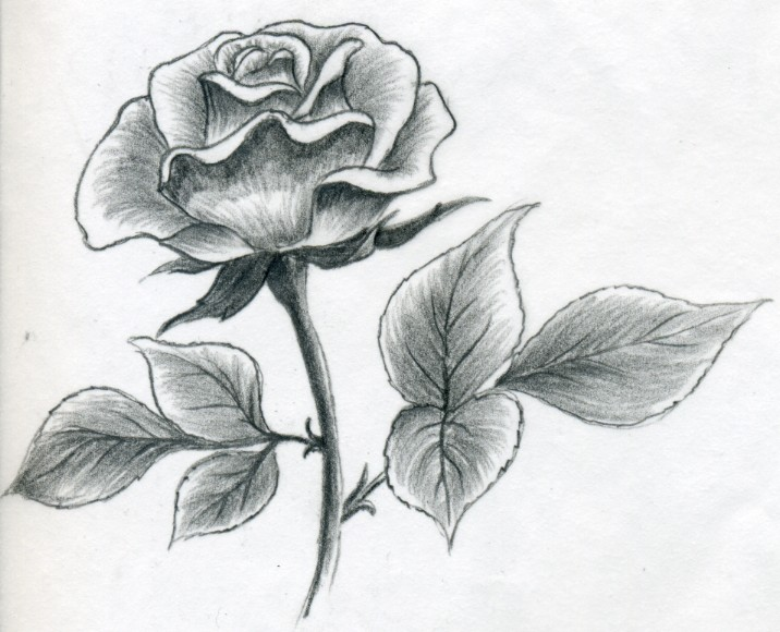 Draw a rose quickly simply and easily ccuart Image collections