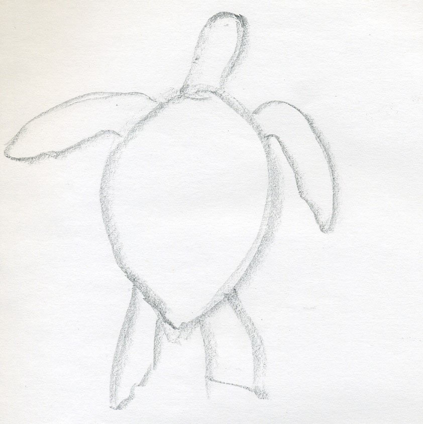 easy draw turtle - photo #27
