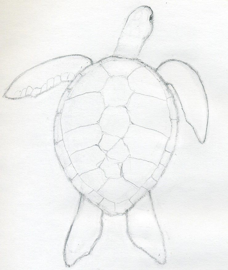 easy draw turtle - photo #2