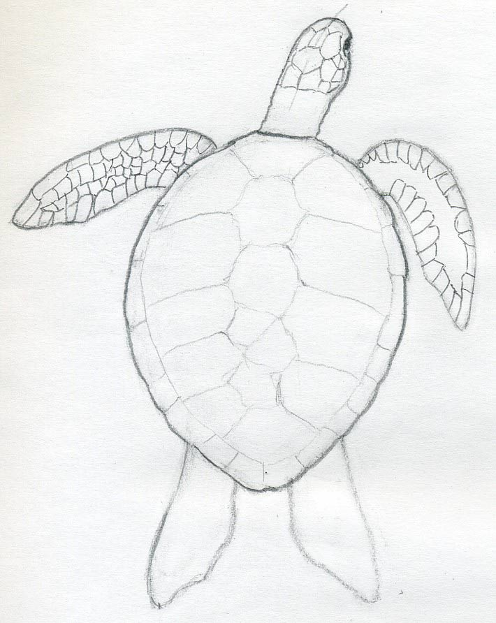 easy draw turtle - photo #3