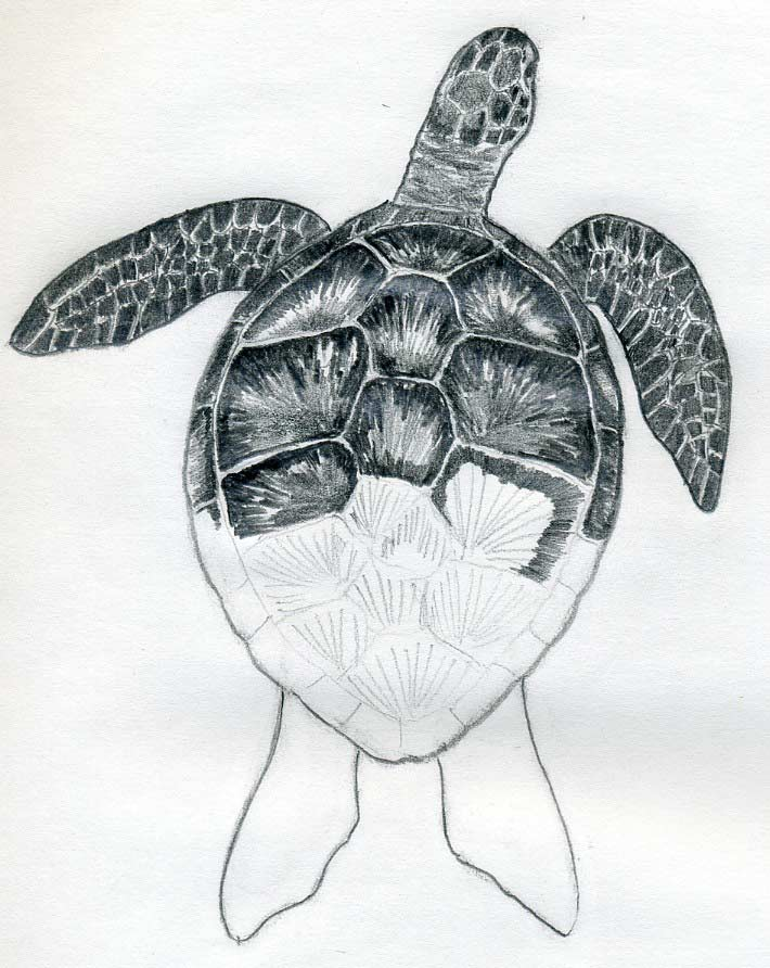 easy draw turtle - photo #29