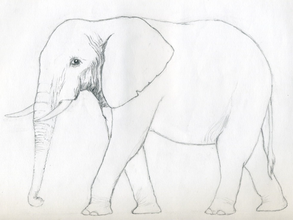 Pencil Sketches Elephant