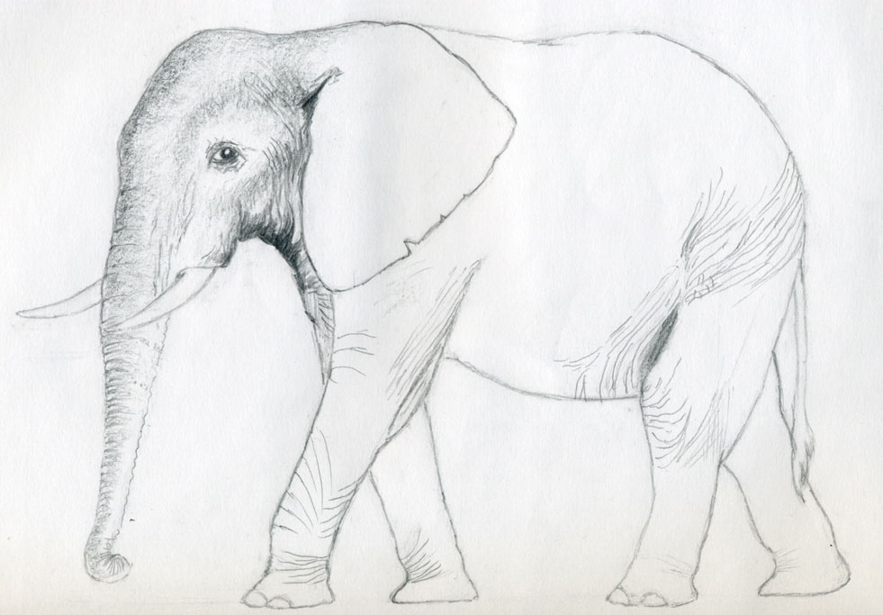 How to draw an elephant ccuart Image collections