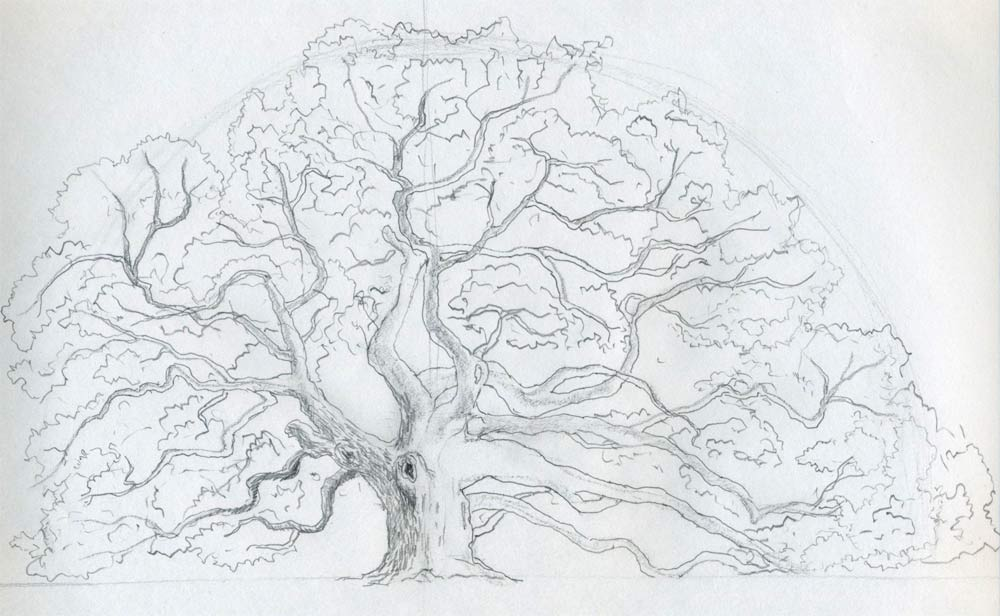 Draw an oak tree angel oak tree for Easy detailed drawings