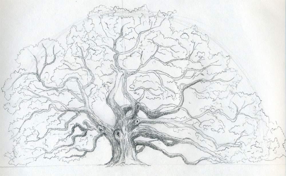 Draw An Oak Tree Angel Oak Tree