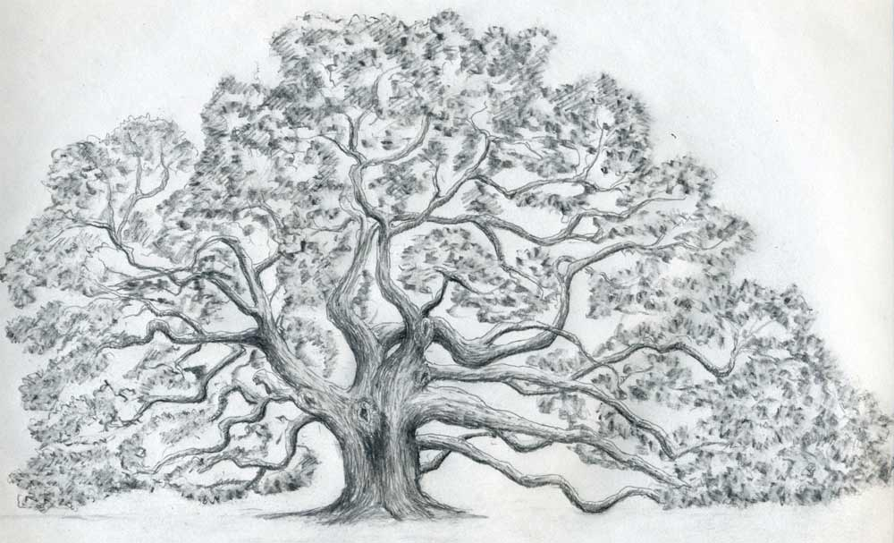 How To Draw An Oak TreeEasy Pictures To Draw Of Trees